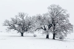 Cold winter day with snowy trees on the hill. Cold winter day with snowy trees stock photos
