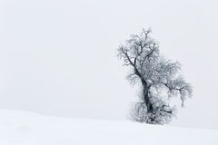 Cold winter day with snowy trees on the hill. Cold winter day with snowy trees royalty free stock photography