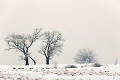 Cold winter day with snowy trees on the hill. Cold winter day with snowy trees royalty free stock photo