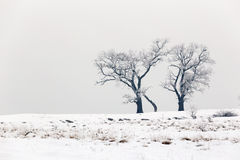 Cold winter day with snowy trees on the hill. Cold winter day with snowy trees stock image