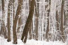 Cold winter day with snowy trees on the hill. Cold winter day with snowy trees stock images