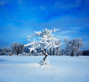Cold winter evening. Winter landscape. Cold winter evening royalty free stock photography