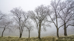 Cold winter fog with a row of trees Royalty Free Stock Photo