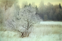 Cold winter forest landscape snow Stock Photography
