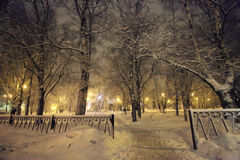 Cold winter forest landscape snow Royalty Free Stock Photo
