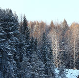 Cold winter forest landscape snow russia Stock Photo