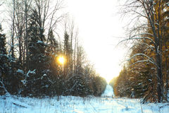Cold winter forest landscape snow russia Royalty Free Stock Photos