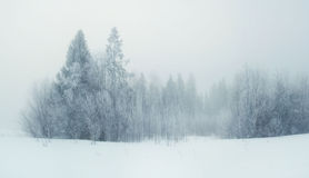 Cold winter forest landscape snowy Royalty Free Stock Images