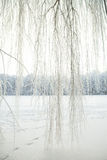 Cold winter forest Stock Images