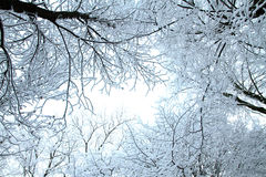 Cold winter forest Stock Image