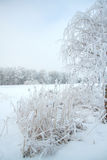 Cold winter forest Stock Photography