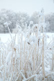 Cold winter forest Stock Photos