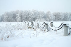 Cold winter forest Royalty Free Stock Image