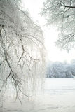 Cold winter forest Royalty Free Stock Photos
