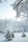 Cold winter forest Royalty Free Stock Photo