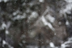 Cold winter forest texture snow Royalty Free Stock Image