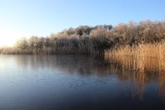 Frost cover on wetland in winter. Cold winter frosty cover natural lake and wetland in sunny day in Usedom Island. Germany Royalty Free Stock Image