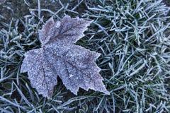 Cold winter frosty leaf background. Cold blue frosty winter icy leaf background Royalty Free Stock Image