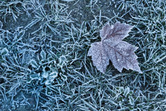 Cold winter frosty leaf background. Cold blue frosty winter icy leaf background Royalty Free Stock Photo