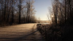 Sunrise and Frostiness in winter. Cold winter  and frosty in sunny day with long wooden bridge by wetlands on Usedom Island. Germany Royalty Free Stock Images