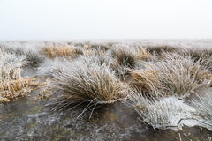 Cold Winter landscape of wetlands with mist and hoar frost Stock Images