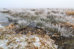 Cold Winter landscape of wetlands with mist and hoar frost Stock Photos