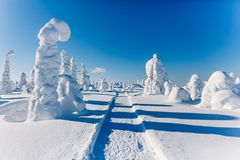 Beautiful snowy winter landscape. Snow covered fir trees on the background. Finland, Lapland royalty free stock image