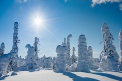 Beautiful snowy winter landscape. Snow covered fir trees on the background. Finland, Lapland stock image