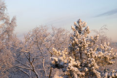 Cold Winter Morning Royalty Free Stock Photography