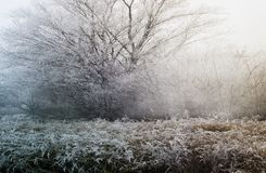Cold winter morning. Beautiful nature, wrapped in the mist Royalty Free Stock Image