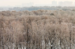 Cold winter morning over urban park Royalty Free Stock Photography
