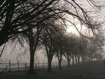Cold winter morning. Sunrise on a cold, foggy winter morning Stock Photography
