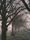 Cold winter morning. Sunrise on a cold, foggy winter morning Stock Photos