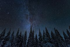 Freezing cold winter night landscape. Cold winter night landscape with trees and starry sky in Finland stock images