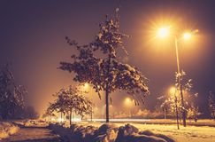 Cold winter night with snow on the tree and ground with street light and moody look low point of view. Winter image. Cold winter night with snow on the tree and royalty free stock photography