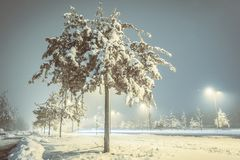 Cold winter night with snow on the tree and ground with street light and moody look low point of view. Winter image. Cold winter night with snow on the tree and stock photography