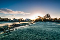 A cold winter scene of frosty field at sunrise with horses, stream and country farmhouse in the background royalty free stock image