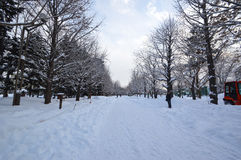 Cold Winter. Winter scene in Sapporo, Hokkaido, Japan. photo taken 25/2/2016 Royalty Free Stock Images