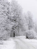 Cold winter scenery. A frozen forest road after heavy snowfall stock photography