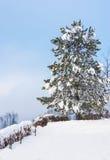 Cold winter season beautiful day Stock Image