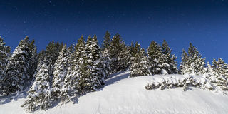 Cold Winter Snowy landscape with Pine Trees Stock Photo