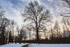 Winter snowy path park landscape. Cold winter snowy path park landscape empty Royalty Free Stock Photos