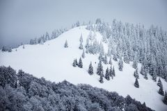Snowy and foggy mountain. Cold winter with snowy trees and foggy landscape royalty free stock photo