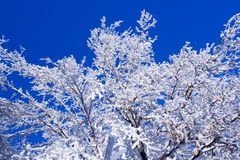 Cold winter tree. Cold frost tree royalty free stock images