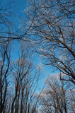 Cold winter in the woods Royalty Free Stock Photography