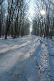 Cold winter in the woods Royalty Free Stock Image