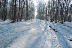 Cold winter in the woods Stock Photography