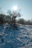 Cold winter in the woods Royalty Free Stock Photo