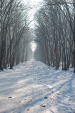Cold winter in the woods Royalty Free Stock Images