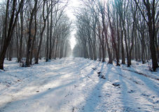 Cold winter in the woods Royalty Free Stock Photos